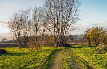 Landstraße in der Nachmittagssonne von Ruud Morijn