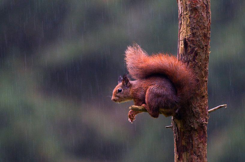 Squirrel von Astrid Brenninkmeijer