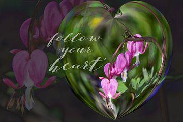 Folge Deinem Herzen von Christine Nöhmeier