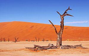 Im Dead Vlei Namibia von W. Woyke