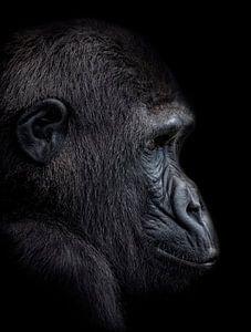 The Young Gorilla Boy van Ron Meijer Photo-Art
