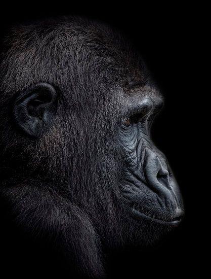 The Young Gorilla Boy van Ron Meijer