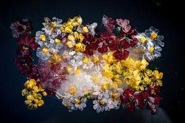 Foto's van bloemen bevroren in ijs van Thilo Wagner