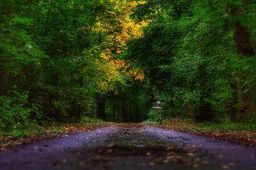 Het duistere pad in de bossen tijdens de start van de herfst. von Mariska Brouwenstijn