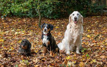 Triple dog van Pieter Heres