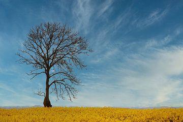 Baum im Rapsfeld von Yvonne Blokland
