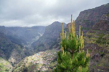 Blick auf das Nonnental auf der Insel Madeira, Portugal von Rico Ködder