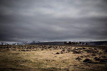 Wild Iceland Horses van marcel wetterhahn