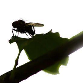 Fly on leaf sur Jos Verhoeven