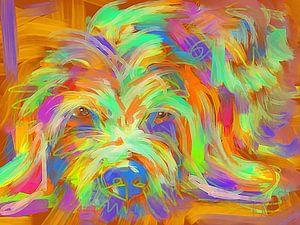 Hund Matze von