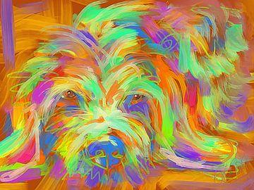 Hund Matze von Go van Kampen