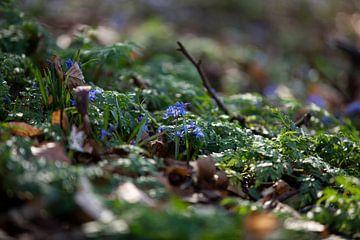 Frühling Wald von Zus en Zo Foto
