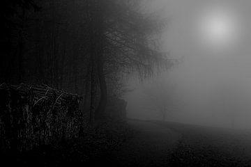 Mysterieuze bomen in de mist van Ella Schnur