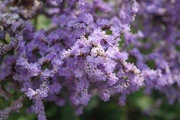 Paarse bloemen van Jasmijn van der Duijn Schouten