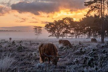 Vuur en IJs van Koen Boelrijk Photography