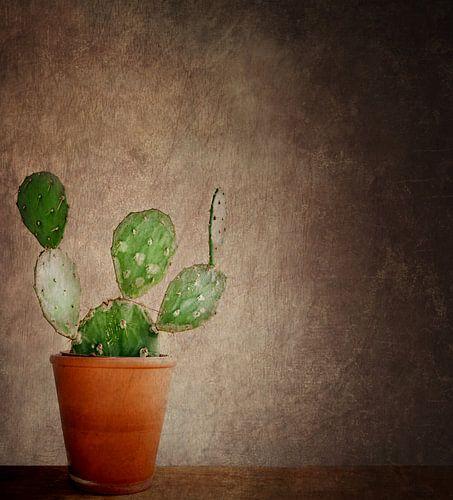 Ein kleiner grüner Kaktus.... von Vera Kämpfe