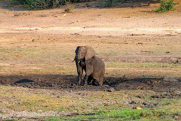 Olifant neemt modderbad in Chobe National Park van Merijn Loch