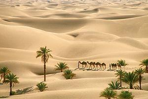 Wüste Sahara. Beduinen mit Kamelen