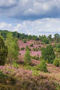 Heidelandschap met heidebloesem, Totengrund, Wilsede, Natuurpark Lüneburger Heide, Nedersaksen, Duit van Torsten Krüger