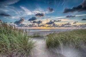 Summer Beach - Hollandse Duinen