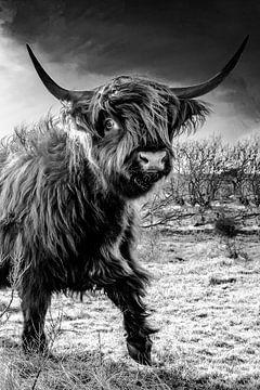 Highlander menace Castricum look menaçant. sur Frank Slaghuis