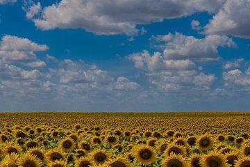 Zonnebloemen von Ruud Bakker