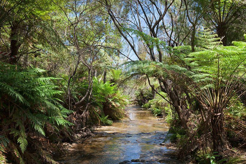 Regenwoud en waterval in de Blue Mountains, Nieuw Zuid-Wales, Australië van Tjeerd Kruse