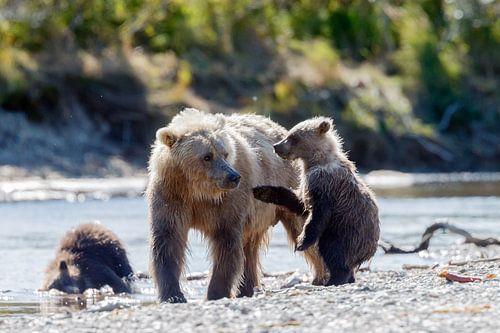 Moeder grizzly beer met jongen van