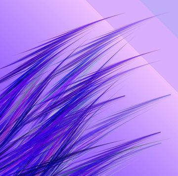 lilac grass van Isa Bild
