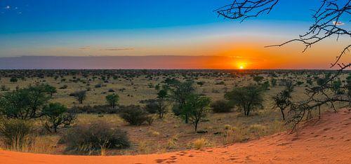 Mooie zonsopkomst in de Kalahari woestijn, Namibië