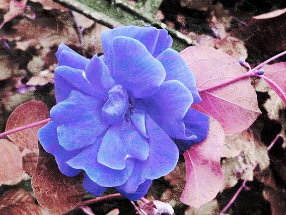 FlowerPower Fantasy 7-A