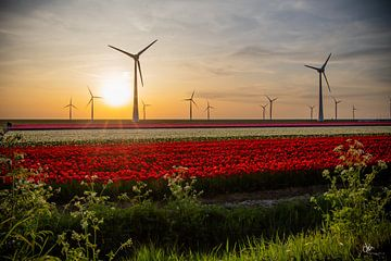 Tulpen in de avond van Dirk Maakt