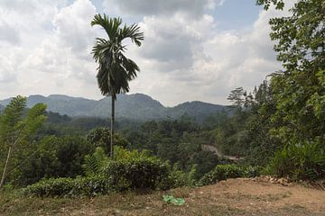 Uitzicht op de jungle van Sri Lanka. van Rijk van de Kaa