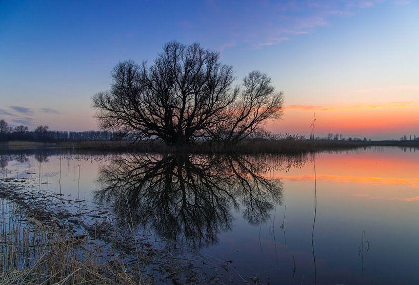 Tree van Eric van Schaijk