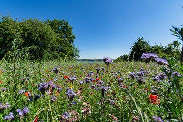 Blumenwiese am Reddevitzer Höft, Blick zum Groß Zicker von GH Foto & Artdesign