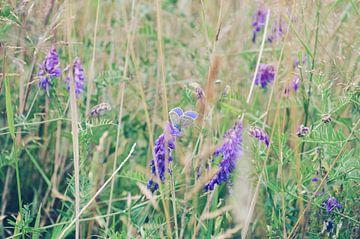 Papillon violet dans un champ de fleurs sur Jolien Steuperaert