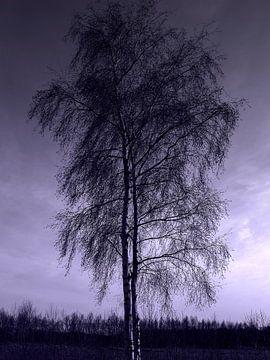 Unaufdringliche Schönheit der Weißbirke im Winter von Jacq Christiaan