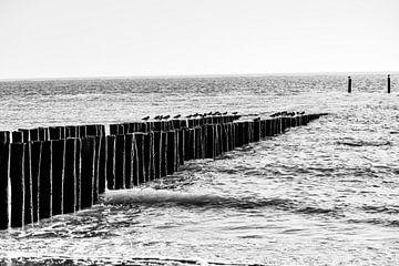 Vogels op strandpalen van Manon van Bochove