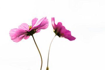 Twee bloemen von Floris van Woudenberg