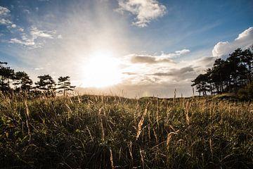 Duinen van Zeeland   Artprint   Natuur   Photographer   Nature van Mascha Boot