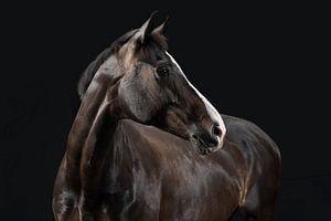 Ein Pferd vom Feinsten. von