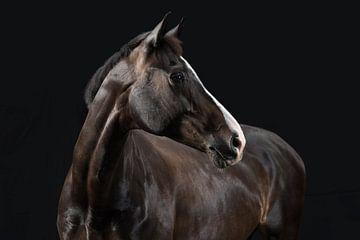 Le cheval à son meilleur. sur Annet van Esch