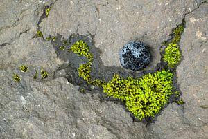 Mossy constellation van