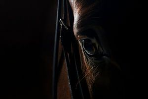Paarden oog 2 Close up