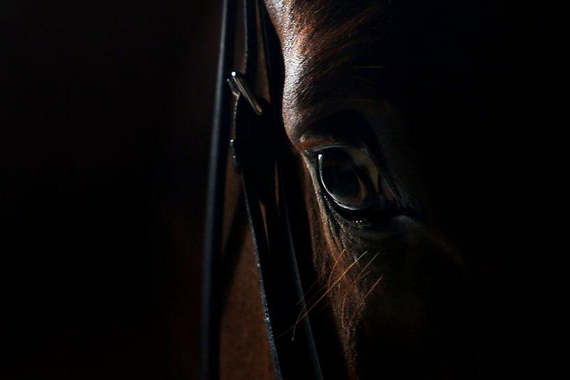 Paarden oog 2 Close up van Wybrich Warns