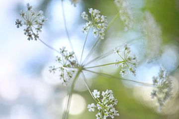Wilde bloem met bokeh van