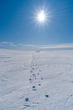 Sporen in de sneeuw op een Zweeds plateau van Leo Schindzielorz