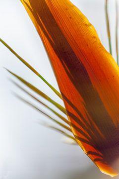 Gras in Tegenlicht van Stephan Van Reisen