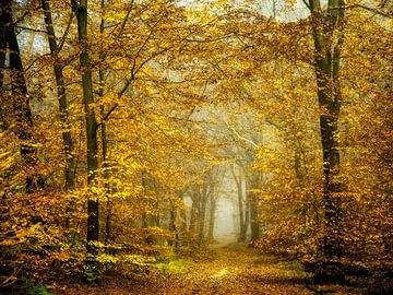 Wald des Goldes von Lars van de Goor