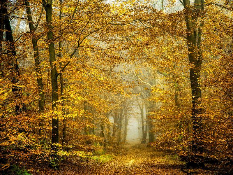 Soon Fall Leaves and Leaves Fall van Lars van de Goor